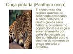 on a pintada panthera onca