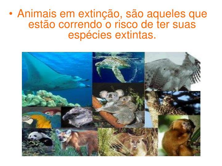 Animais em extinção, são aqueles que estão correndo o risco de ter suas espécies extintas.