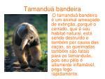 tamandu bandeira