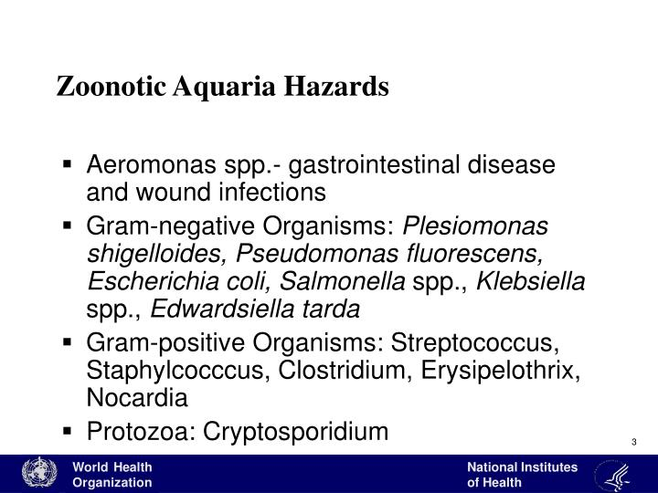 Zoonotic aquaria hazards