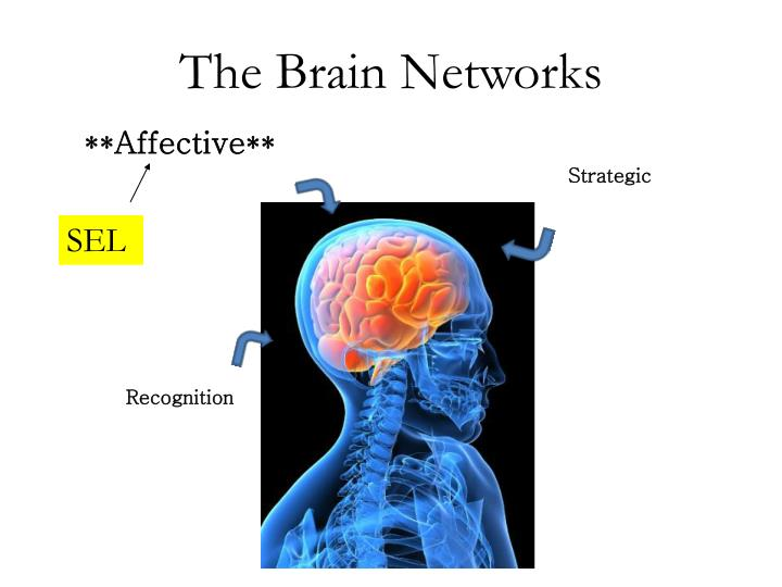 The Brain Networks