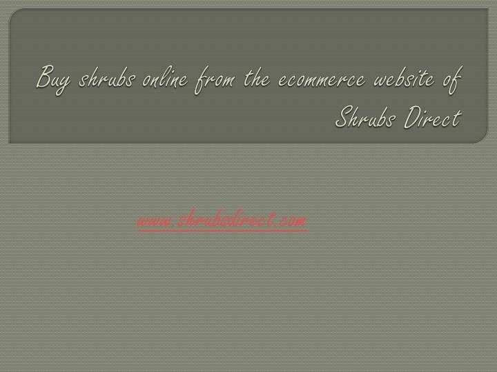 Buy shrubs online from the ecommerce website of Shrubs Direct