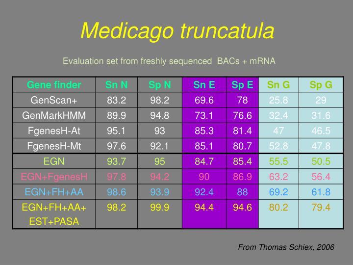 Medicago truncatula