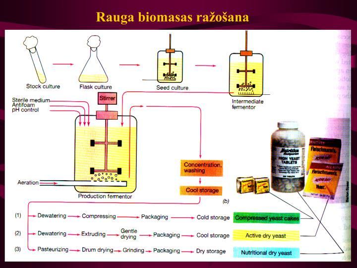 Rauga biomasas ražošana
