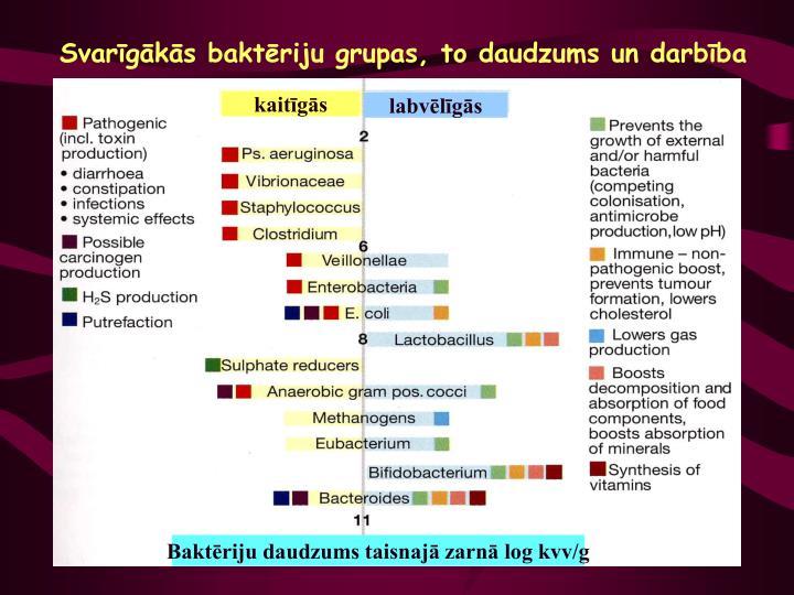 Svarīgākās baktēriju grupas, to daudzums un darbība
