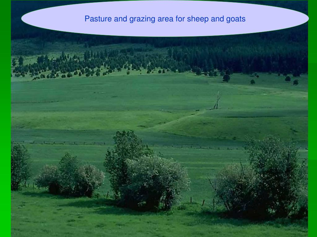Pasture and grazing area for sheep and goats