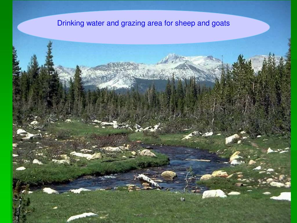 Drinking water and grazing area for sheep and goats