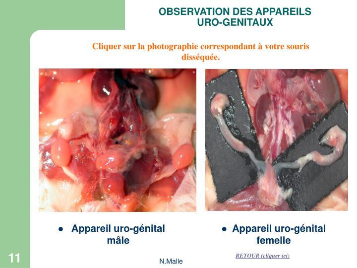 OBSERVATION DES APPAREILS URO-GENITAUX