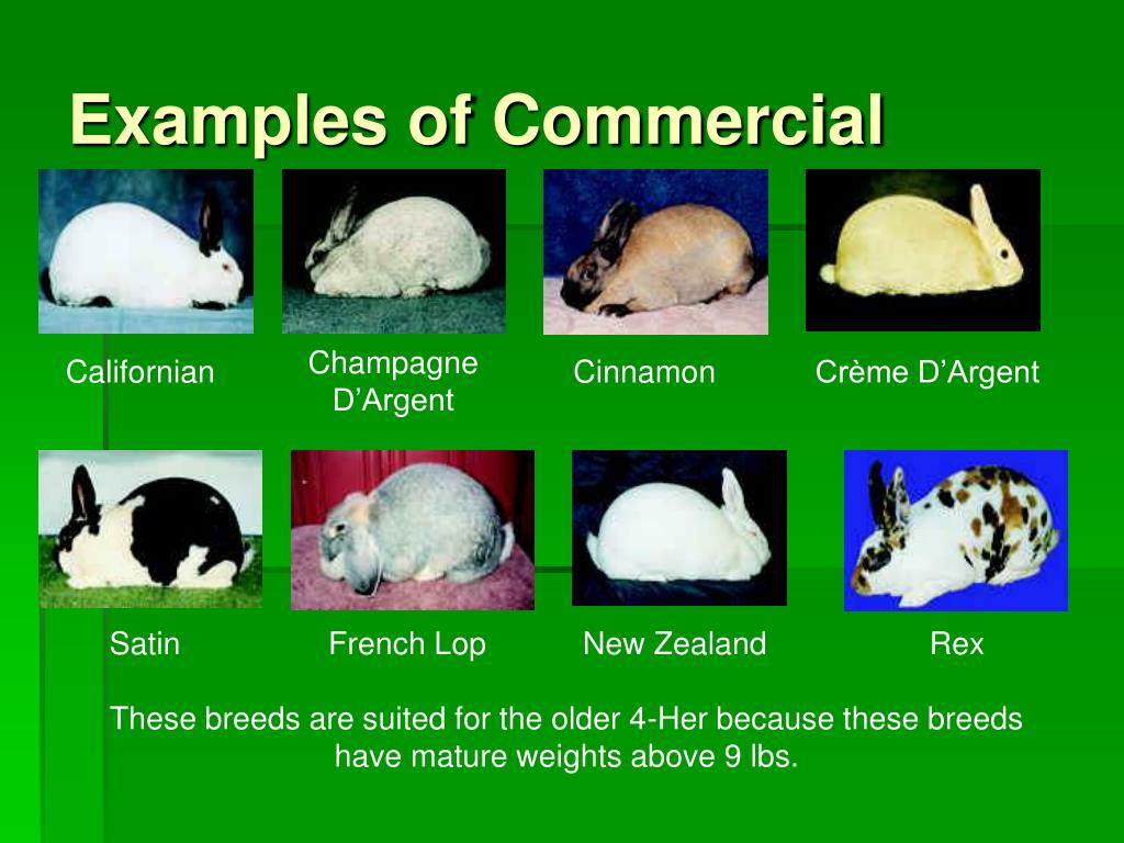 Examples of Commercial