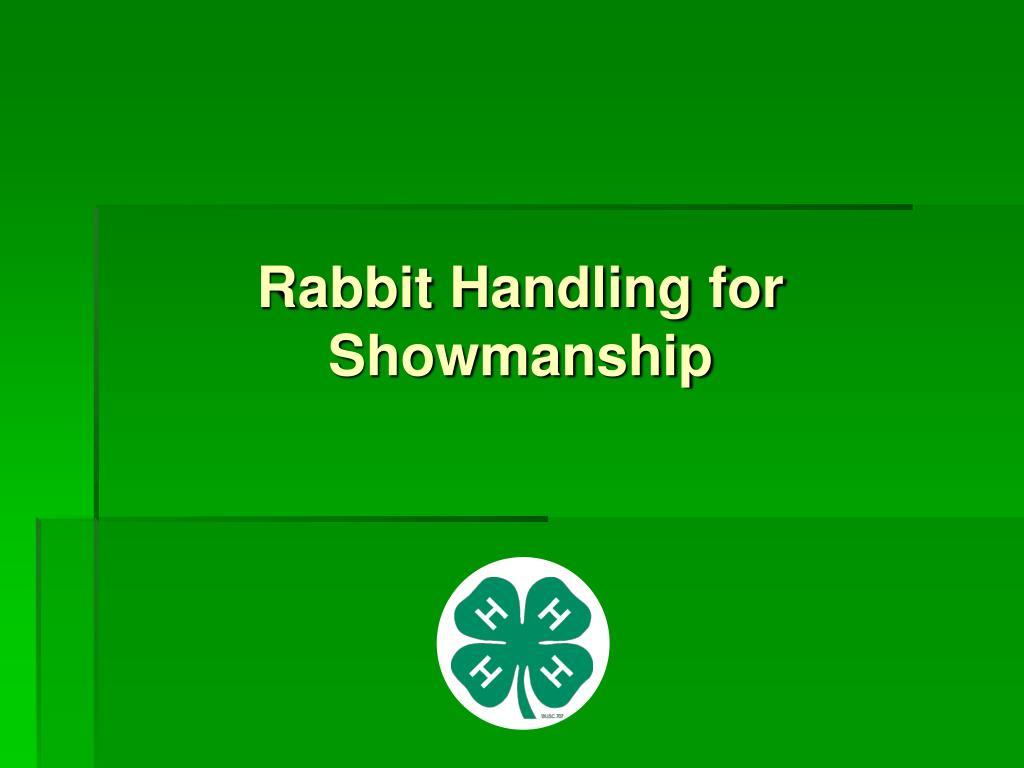 Rabbit Handling for Showmanship