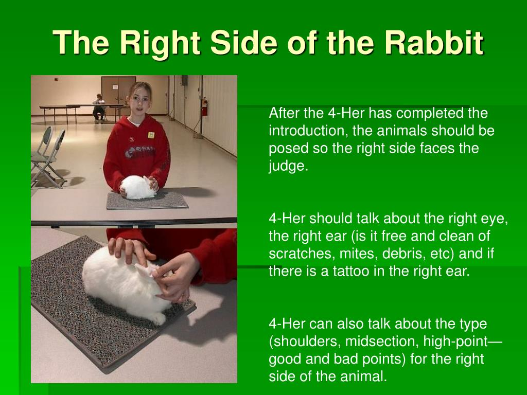 The Right Side of the Rabbit