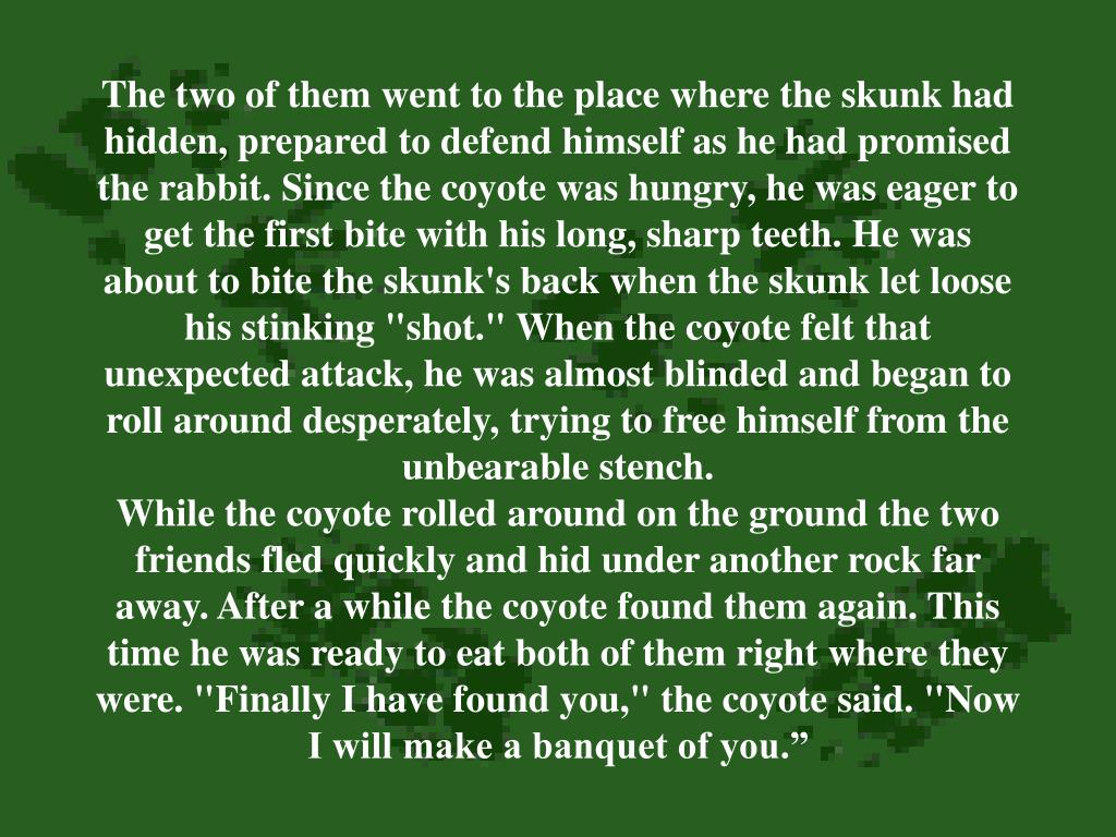 "The two of them went to the place where the skunk had hidden, prepared to defend himself as he had promised the rabbit. Since the coyote was hungry, he was eager to get the first bite with his long, sharp teeth. He was about to bite the skunk's back when the skunk let loose his stinking ""shot."" When the coyote felt that unexpected attack, he was almost blinded and began to roll around desperately, trying to free himself from the unbearable stench."