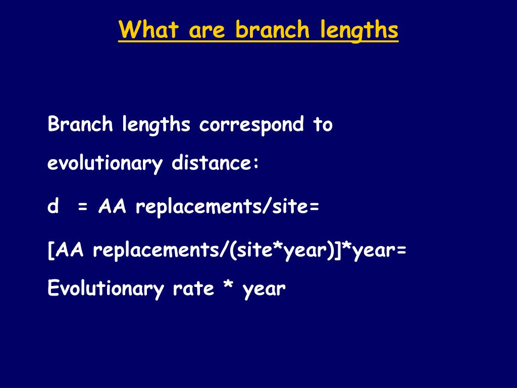What are branch lengths