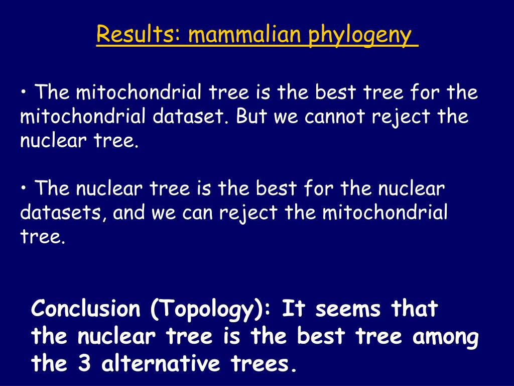 Results: mammalian phylogeny