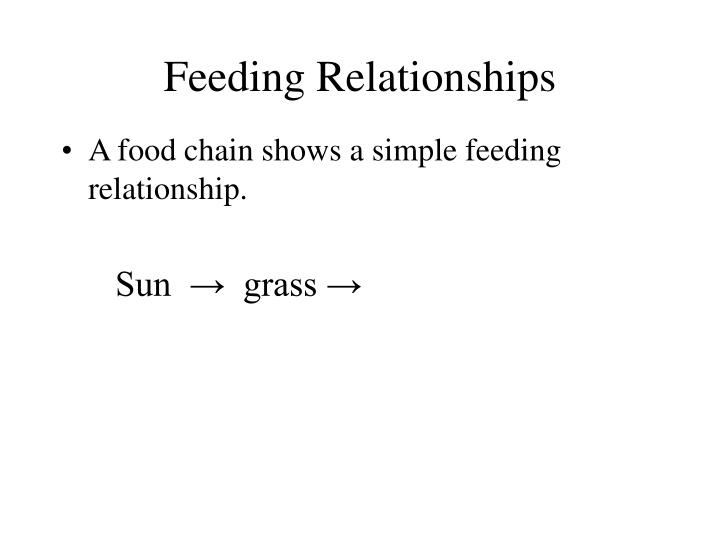Feeding relationships2