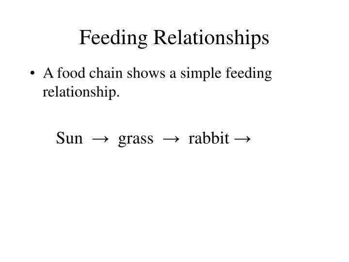 Feeding relationships3