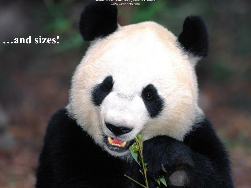 …and sizes!