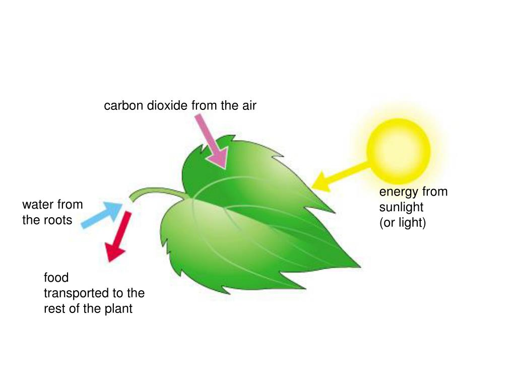 carbon dioxide from the air