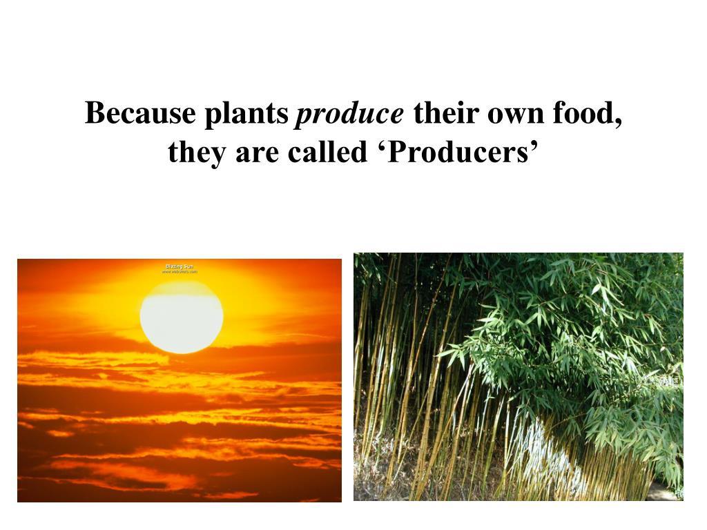 Because plants