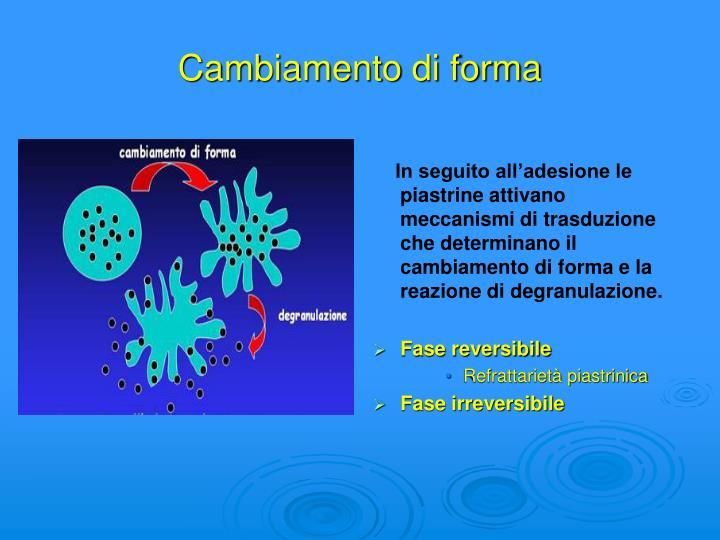 In seguito all'adesione le piastrine attivano meccanismi di trasduzione che determinano il cambiamento di forma e la reazione di degranulazione.