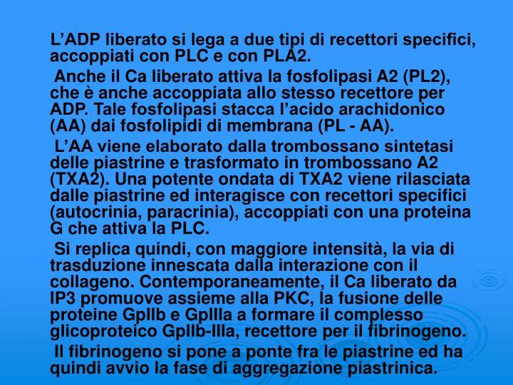 L'ADP liberato si lega a due tipi di recettori specifici, accoppiati con PLC e con PLA2.