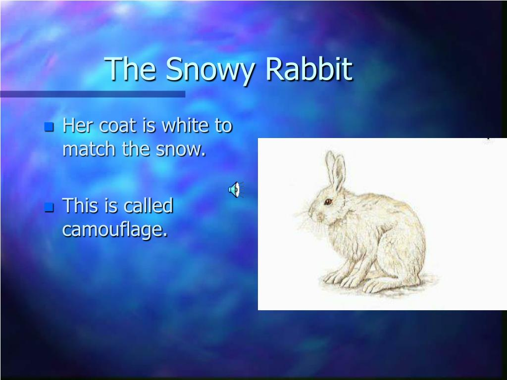 The Snowy Rabbit