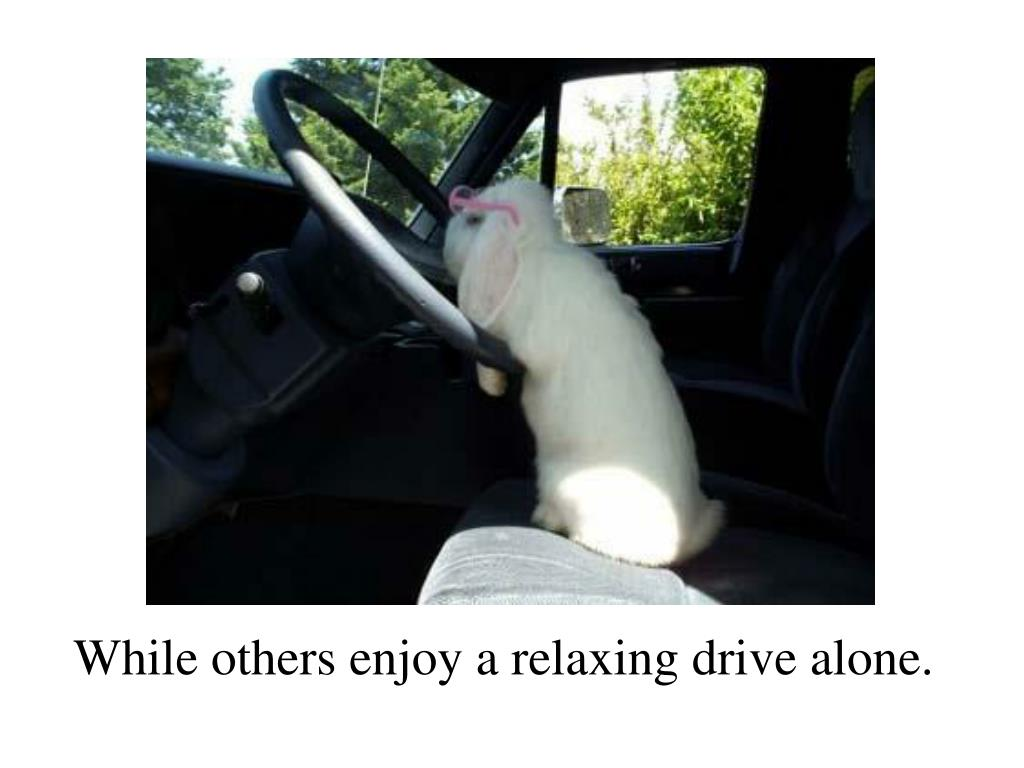 While others enjoy a relaxing drive alone.