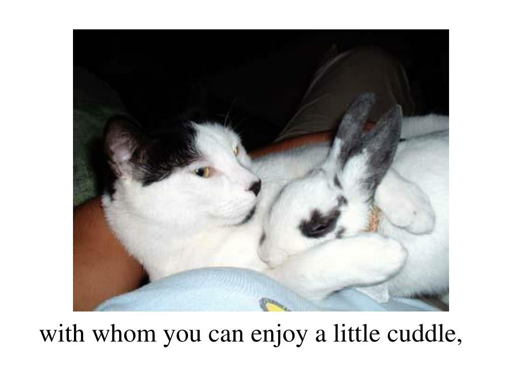 with whom you can enjoy a little cuddle,