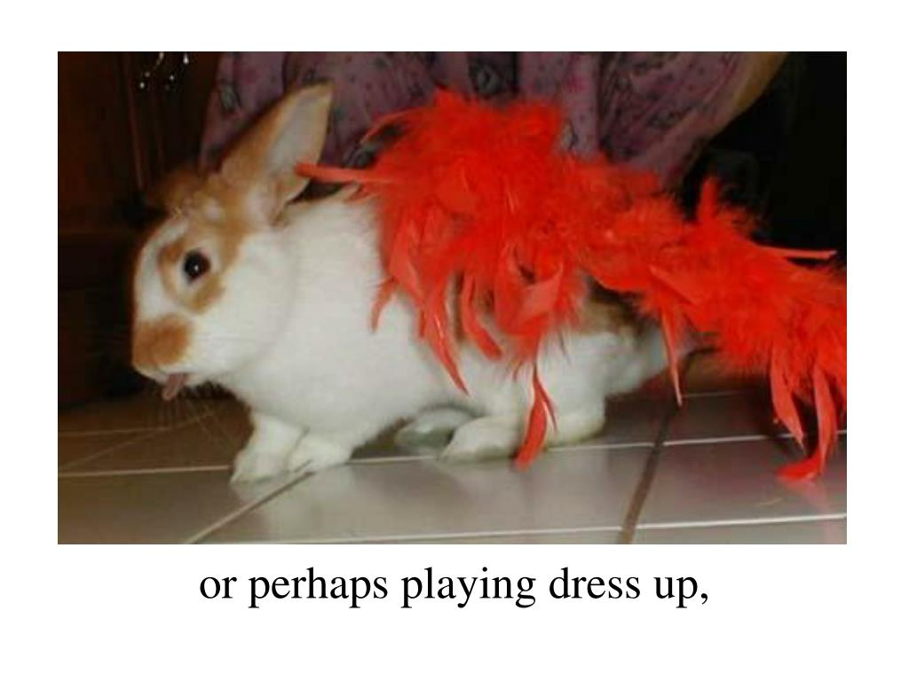 or perhaps playing dress up,