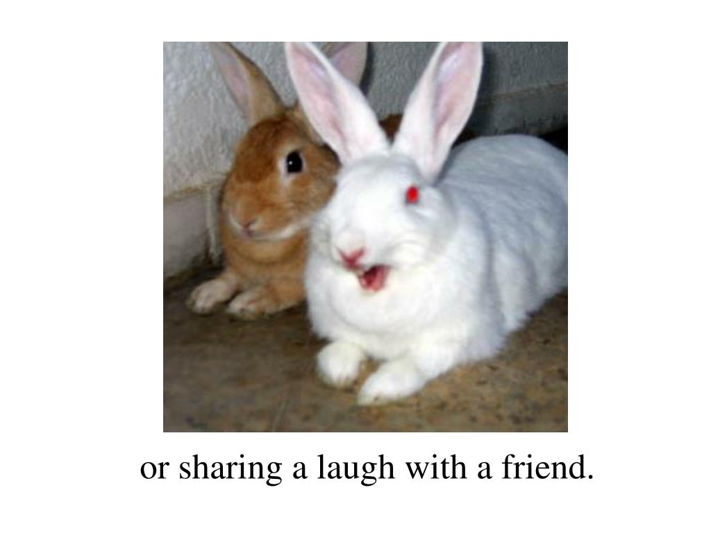 or sharing a laugh with a friend.