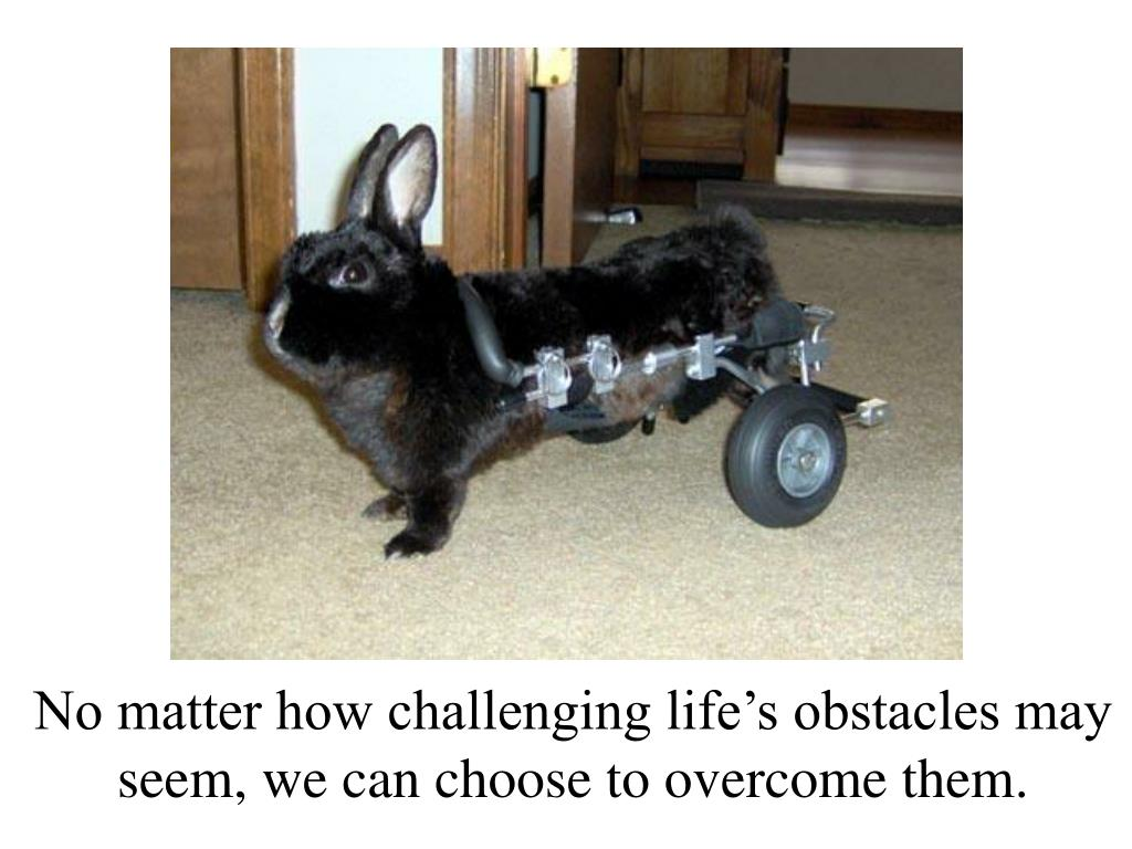 No matter how challenging life's obstacles may seem, we can choose to overcome them.