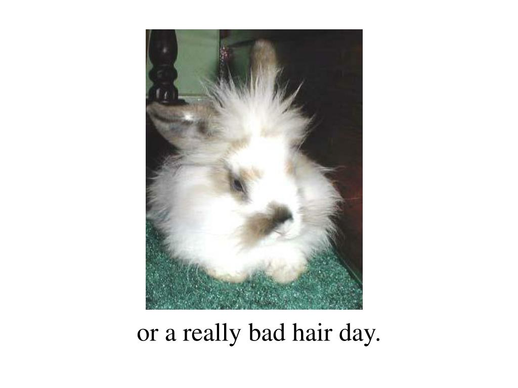 or a really bad hair day.