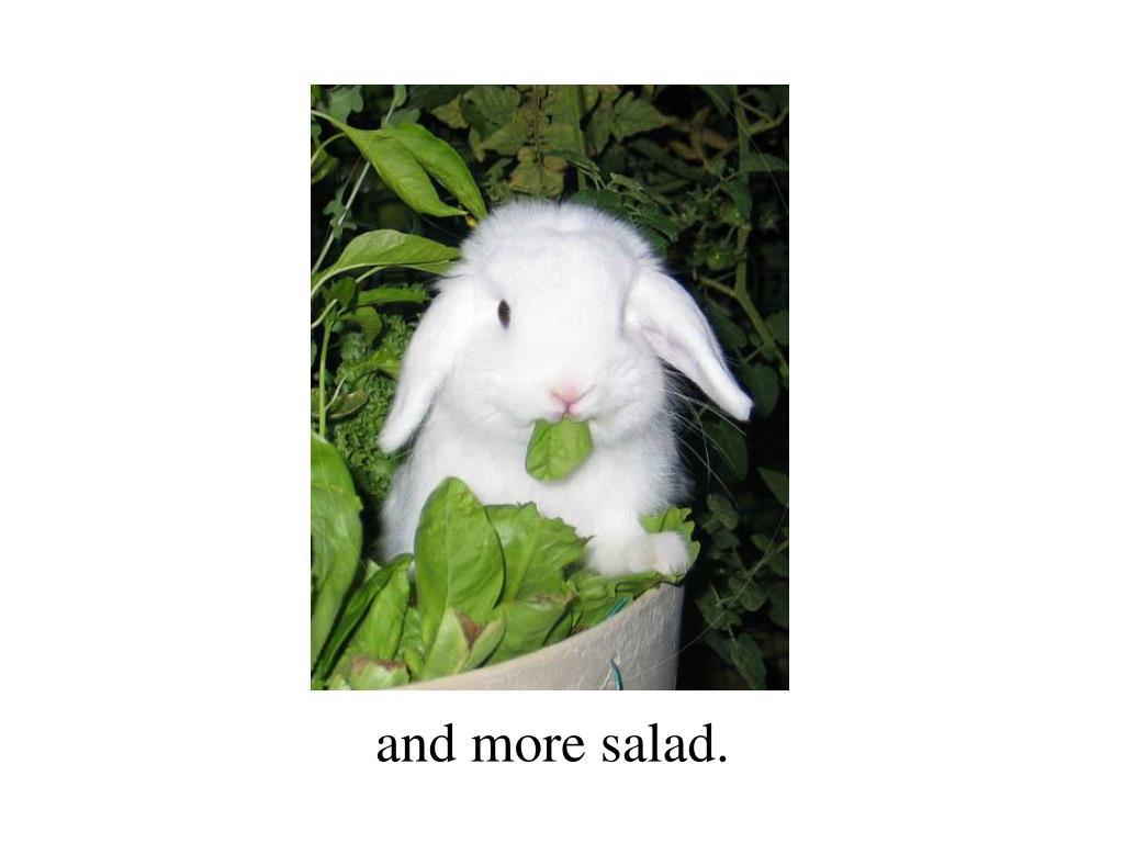 and more salad.