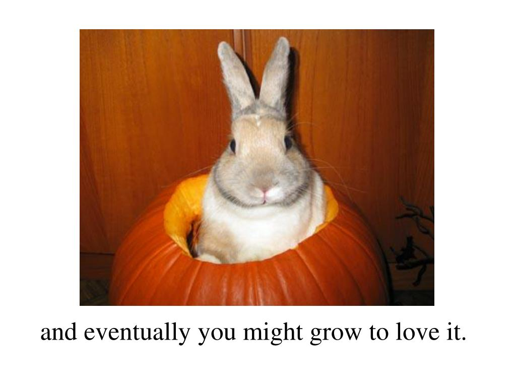and eventually you might grow to love it.