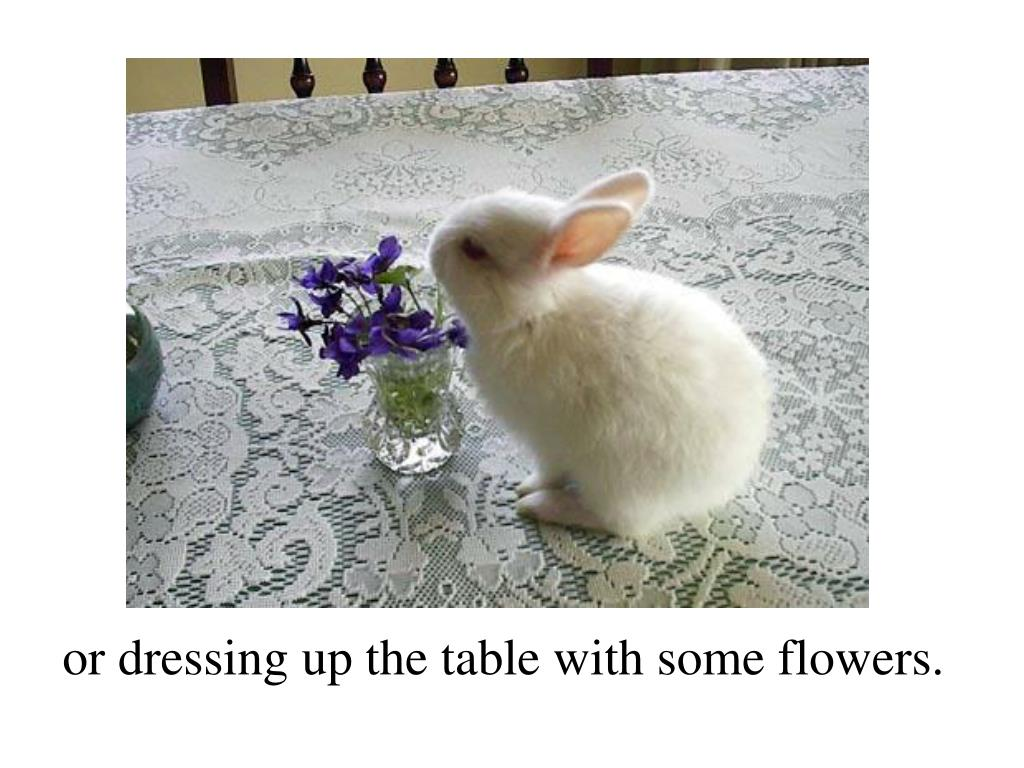 or dressing up the table with some flowers.