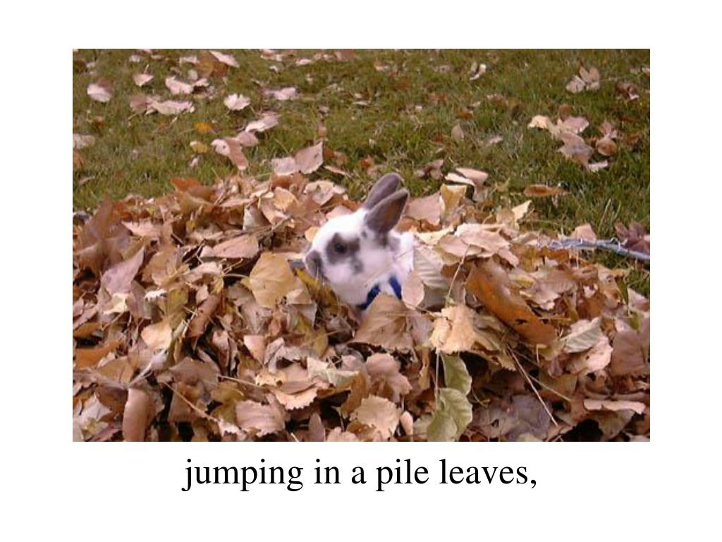 jumping in a pile leaves,