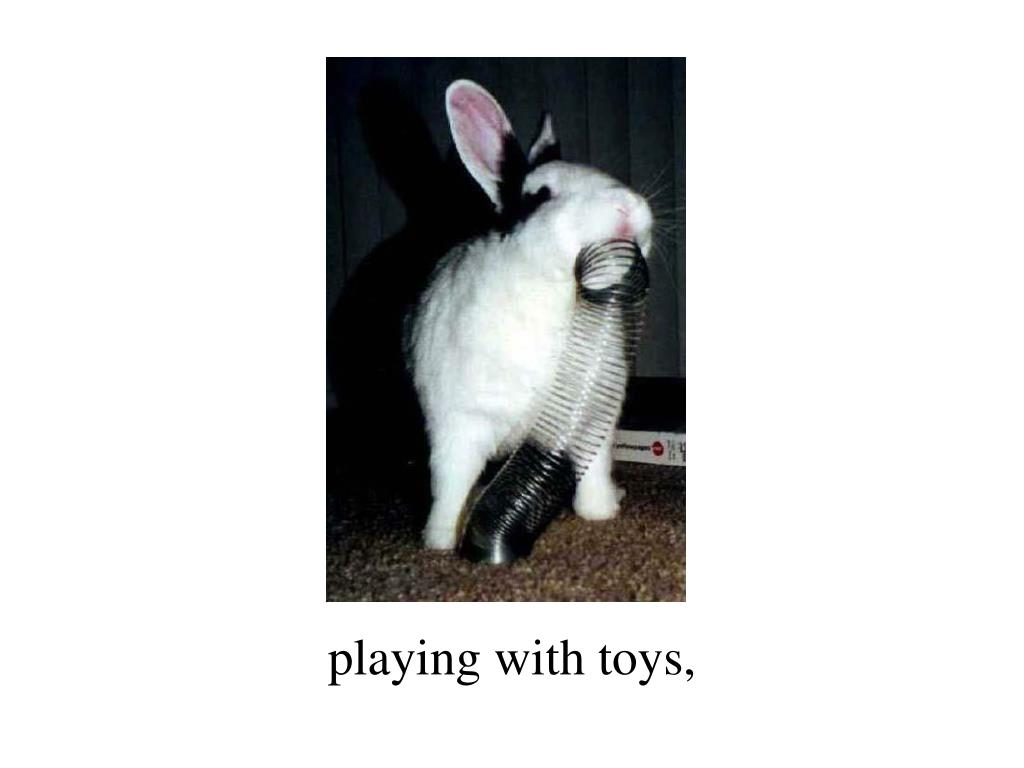 playing with toys,