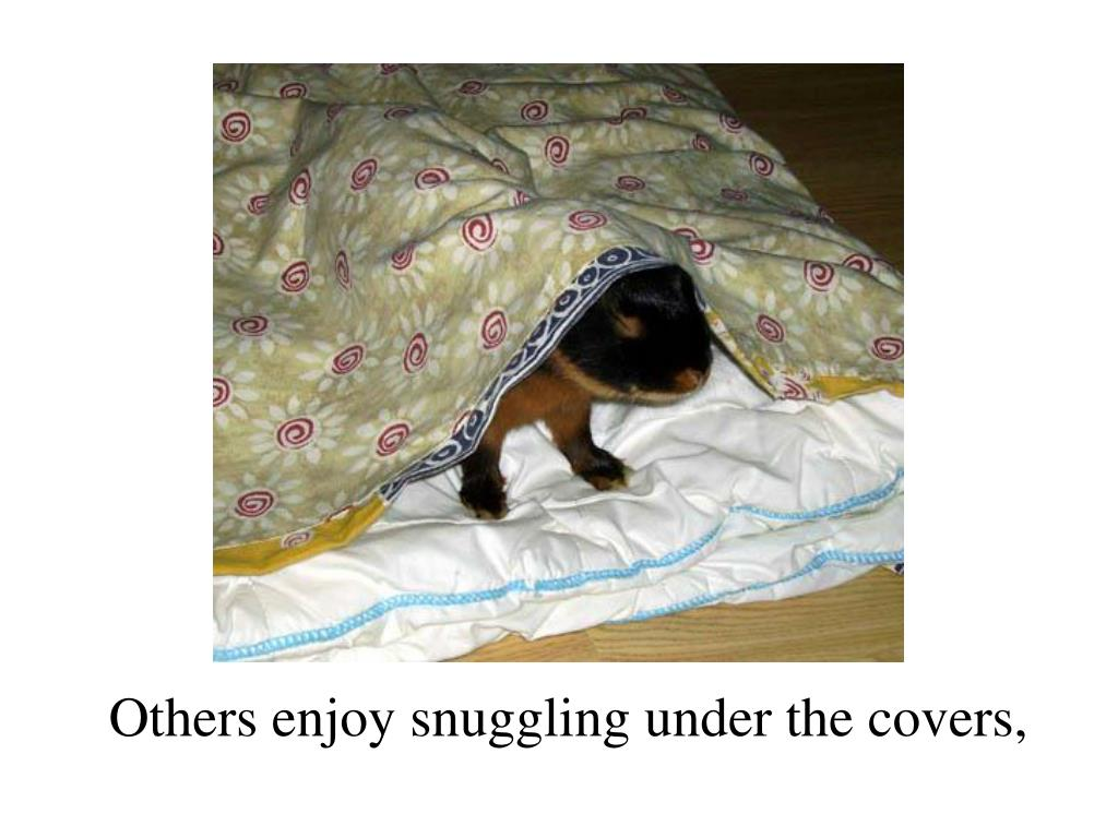 Others enjoy snuggling under the covers,