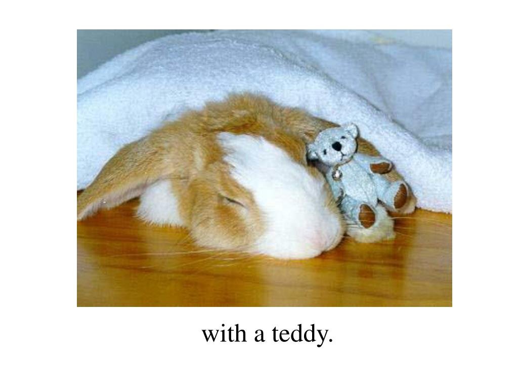 with a teddy.
