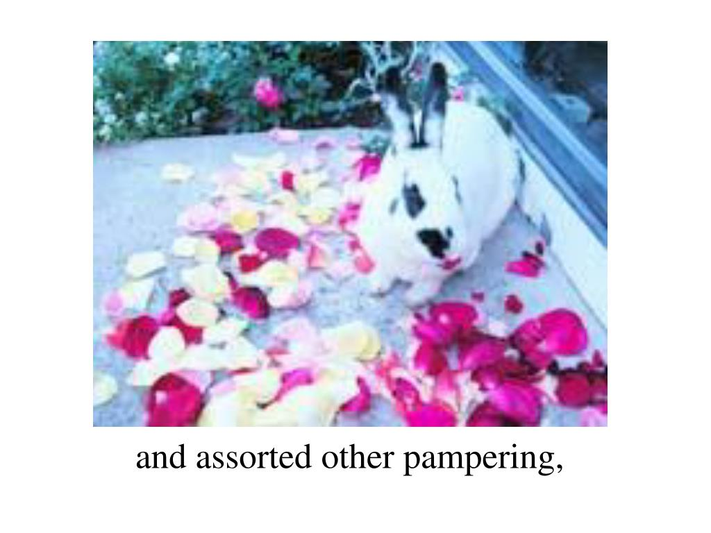 and assorted other pampering,
