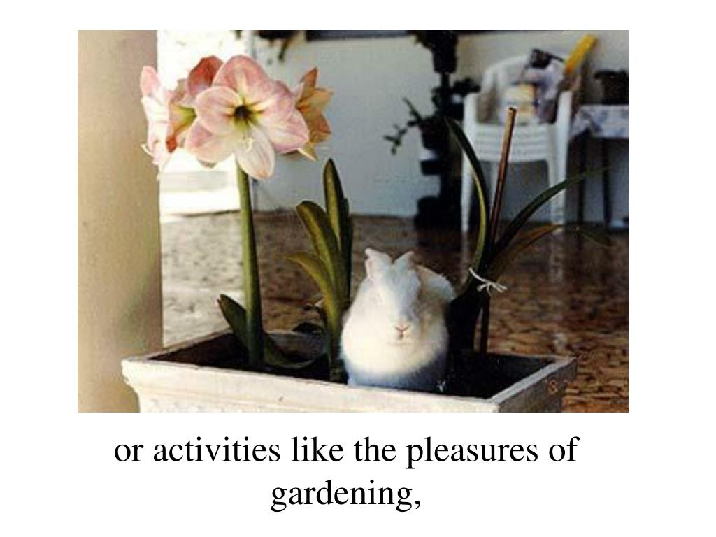 or activities like the pleasures of