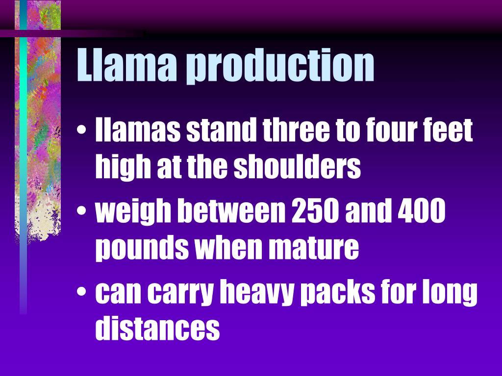 Llama production