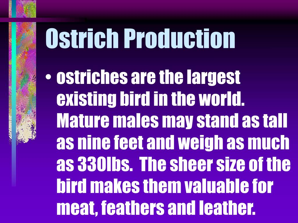 Ostrich Production