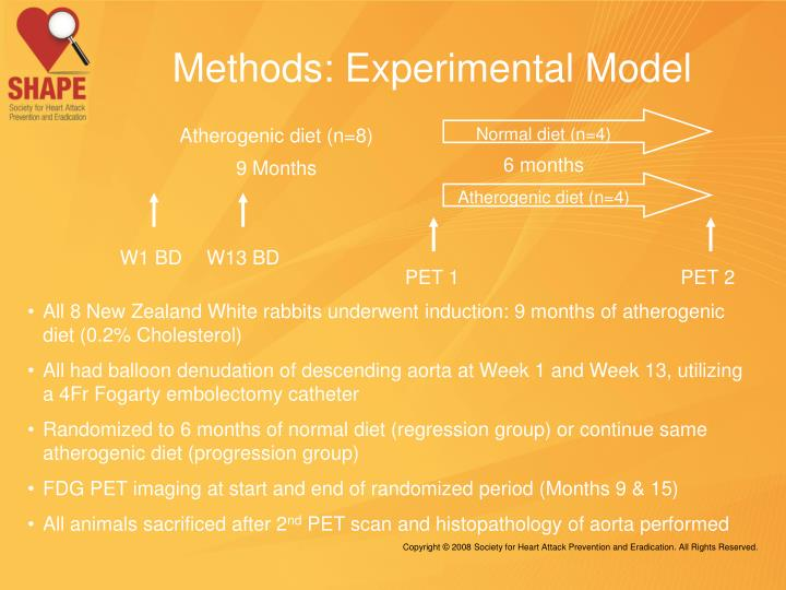 Methods: Experimental Model
