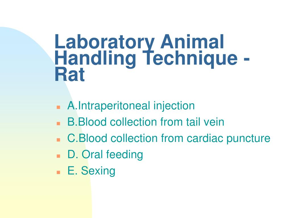 Laboratory Animal Handling Technique - Rat