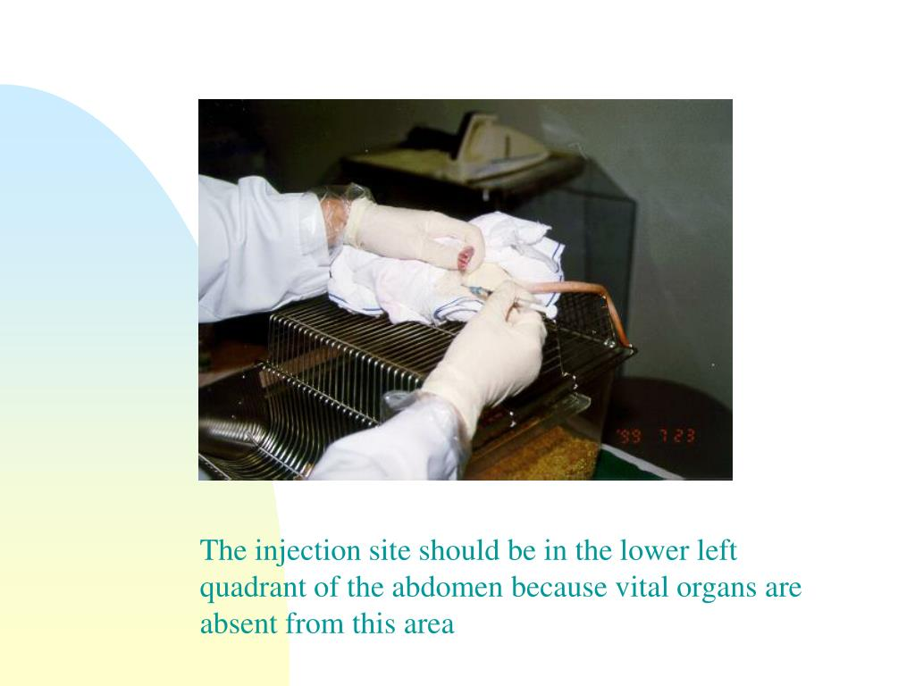 The injection site should be in the lower left quadrant of the abdomen because vital organs are absent from this area