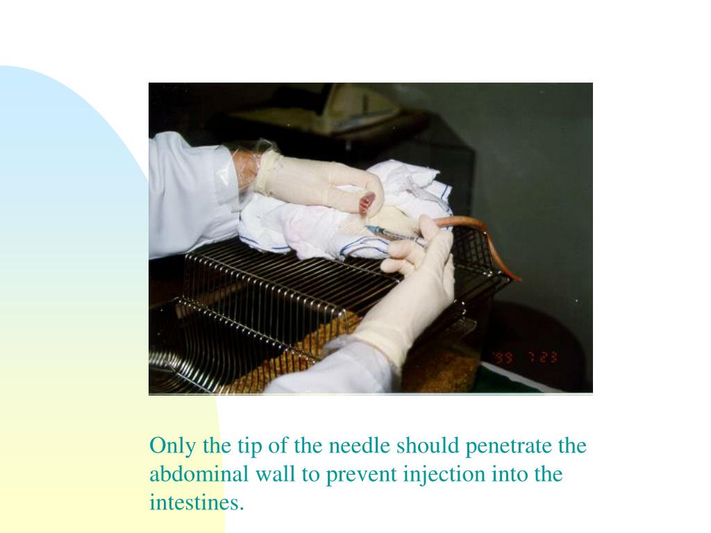 Only the tip of the needle should penetrate the abdominal wall to prevent injection into the intestines.