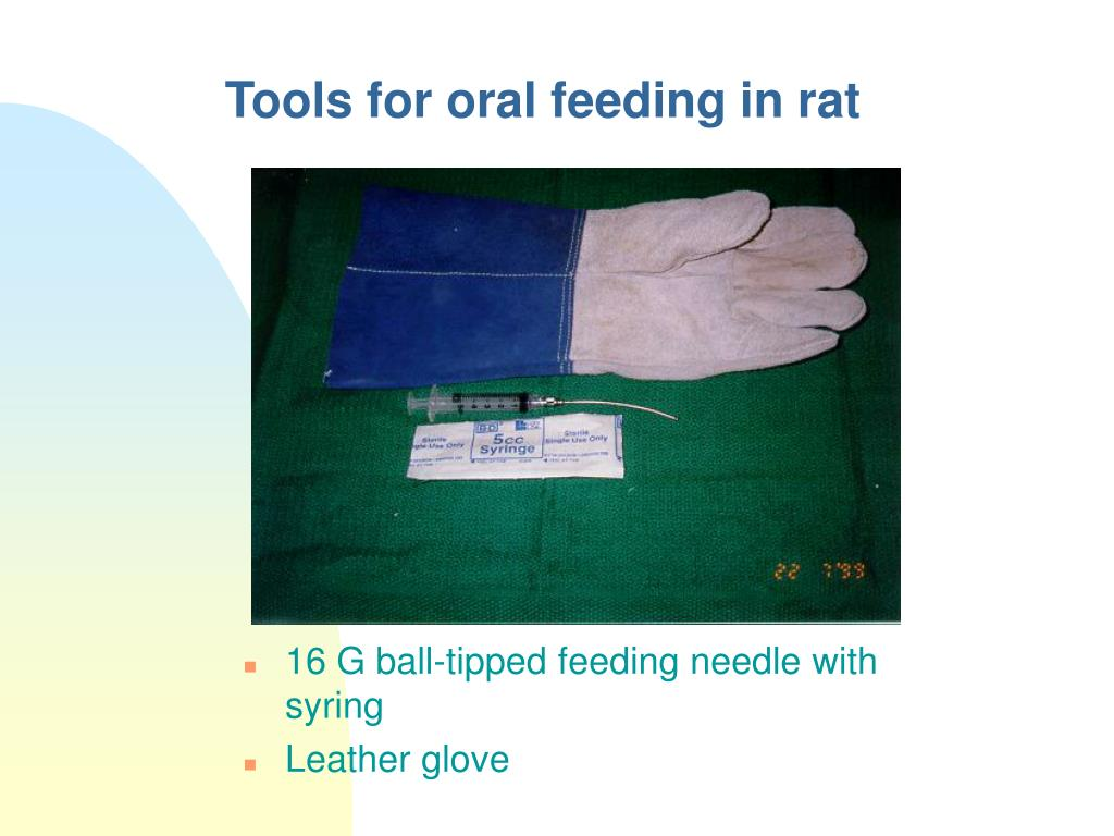 Tools for oral feeding in rat