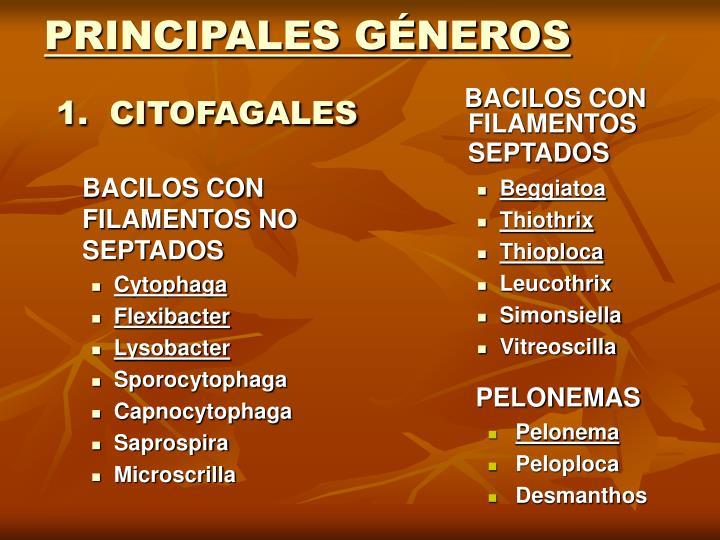 PRINCIPALES GÉNEROS