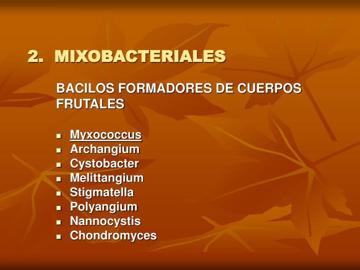 2.  MIXOBACTERIALES